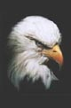 Click Here To Download Eagle's Head